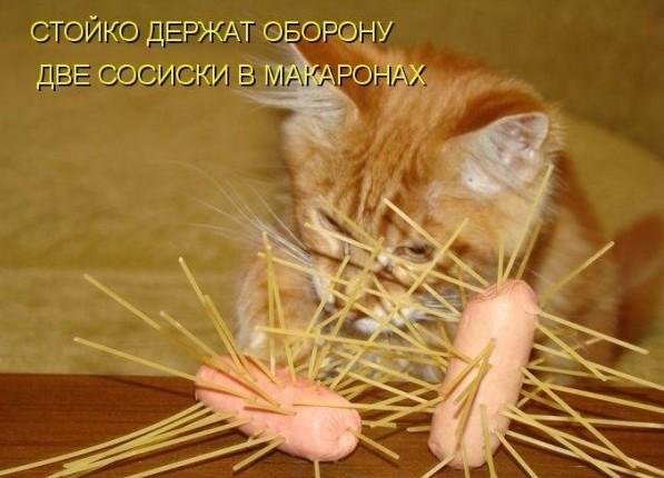 Сосиски. макароны и кот