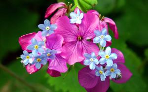 Цветочная рассада - советы по выращиванию