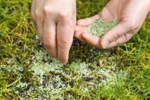 Подсев травы по всему периметру газона