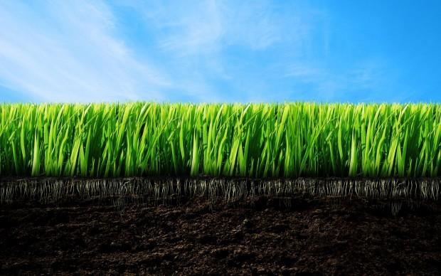 Ремонт газона весной