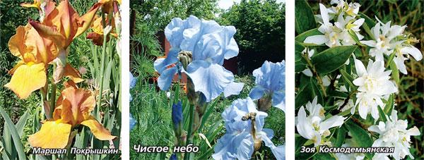 Сорта цветов ко Дню Победы!