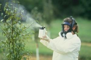 Необычные советы по защите и уходу за садовыми растениями
