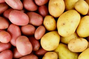 ФАНО РОССИИ создаст в Сибири банк семян картофеля