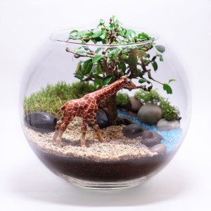 Флорариум — мини-сад