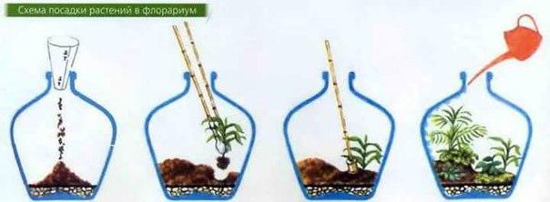 Процесс изготовления флорариума