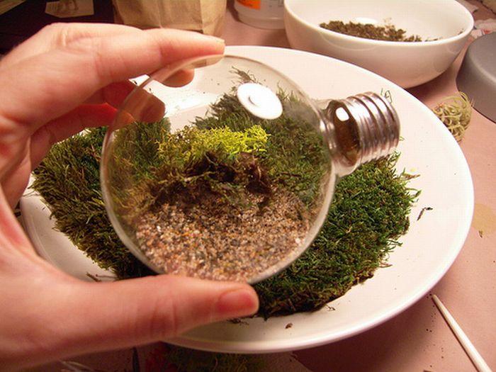 Фото-урок «Флорариум в лампочке»