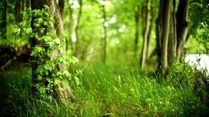 Мир растений (новости недели 15.05 - 21.05)