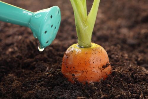 Правильный полив овощей