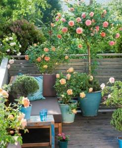 Выбор правильной кадки для роз на балконе, террасе