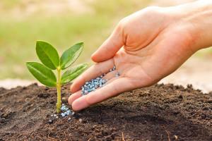 Удобрения - классификация, плюсы и минусы