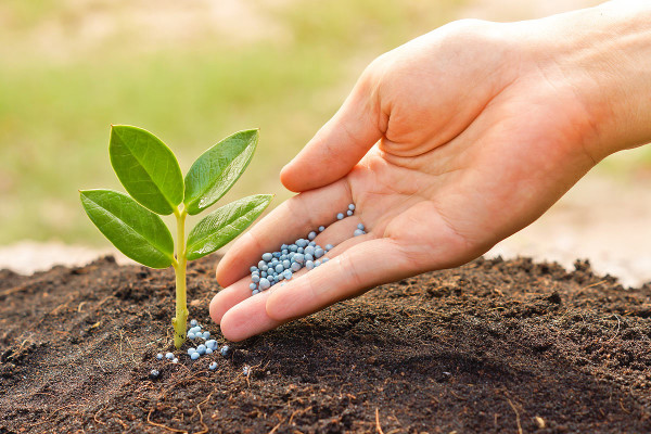 Удобрения — классификация, плюсы и минусы