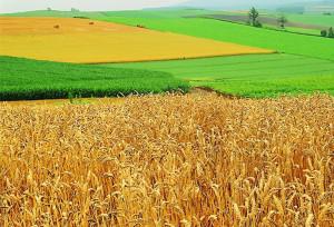 Законопроект о сельхозземлях