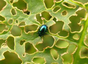 Привлекаем полезных хищников в сад для борьбы с вредителями