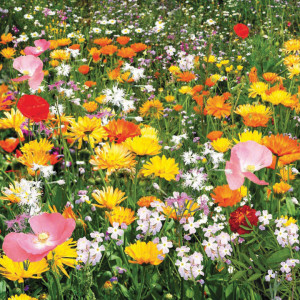 Среди растений, привлекающих насекомых