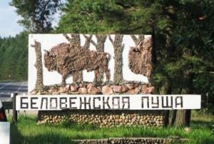 Вырубка Беловежской пущи в Польше