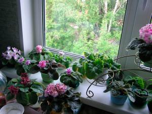 Лето для комнатных растений