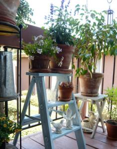 Приучение к уличным условиям комнатные растения