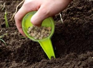 Сеем зелень и овощи летом (Салатные овощи, шпинат, латук, кресс-салат, кориандр, листовую горчицу, рукколу)