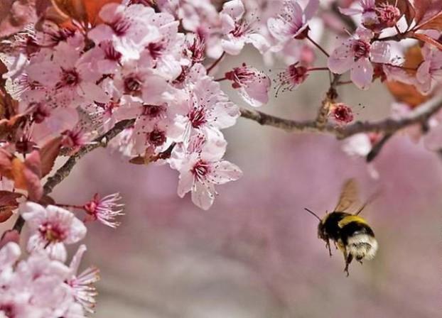Симбиоз деревьев с животными и насекомыми