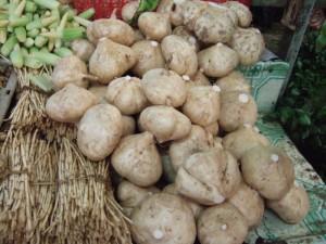 Хикама, или Джикама, Мексиканский картофель, Мексиканский ямс, Ямсовая фасоль, Пахиризус вырезной (Pachyrhizus erosus)