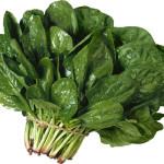 """Шпинат """"Застольный"""" (Spinacia oleracea)"""