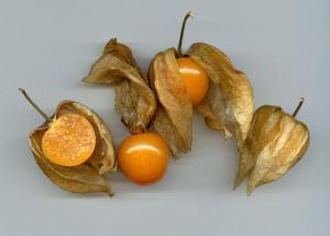 Физалис земляничный, или Физалис опушенный, Физалис флоридский, Физалис барбадосский, Крыжовник карликовый капский, Физалис изюмный  (Physalis pubescens)