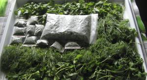 Замораживание зелени