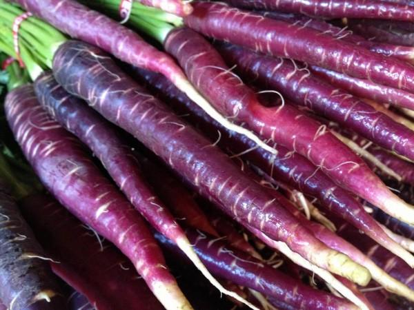 Морковь фиолетовая, или Морковь дикая, или Морковь обыкновенная (Daucus carota)