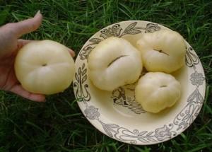 Большой белый бифштекс (Great white beefsteak, Grande Blanche)