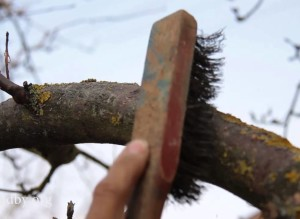 Уход за корой деревьев