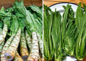 Салат спаржевый Уйсун (Lactuca asparagus)