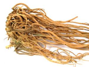 Соломоцвет двузубый, Ахирантес, Ахирант, Железник  (Achyranthus bidentata Blume = Achyranthus japonica (Miq.) Nakai)