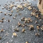 Пестициды – смертельный враг пчел
