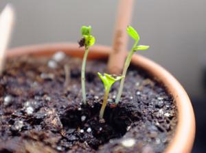 "Карандаш ""Росток"" (Sprout)"