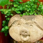 "Трифолиум ""Rockery Grass"", или Sheung-шуй, Любовь трава (Trifolium Rockery Grass)"