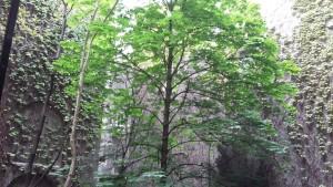 """""""Лесной город"""" и вертикальные леса в Китае"""