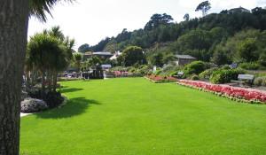 Газон - сорта трав и характеристики