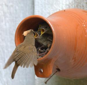 Кормушки для диких птиц и животных