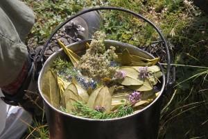 Дикие съедобные растения