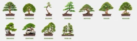 Формы и стили бонсай для Конского каштана