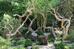 Рутарий - сад корней
