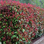 Забор из растений - стена или узор