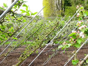 Забор из растений