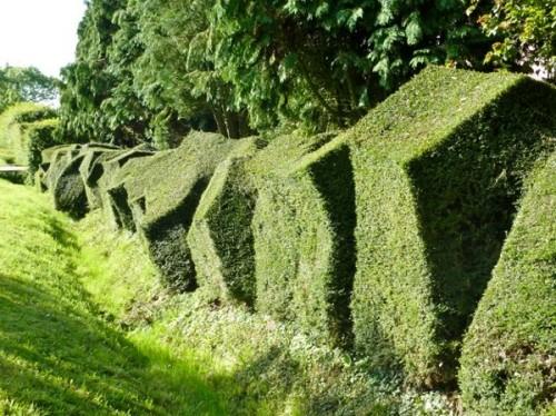 Забор из растений — стена или узор