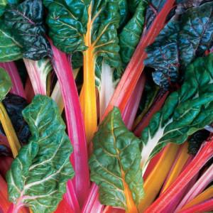Купить семена, растение – Мангольд декоративный Светофор (Mangold)