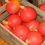 """Купить семена, растение – Потимарон """"Орандж"""", или Каштановая тыква, желудевая тыква, зимняя тыква, Хоккайдо (Potimarron, Hokkaido pumpkin)"""