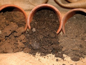 Какую почву для какого растения выбрать