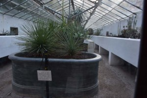 Рис. 13. Исторические вазоны для выращивания кактусов и суккулентов.