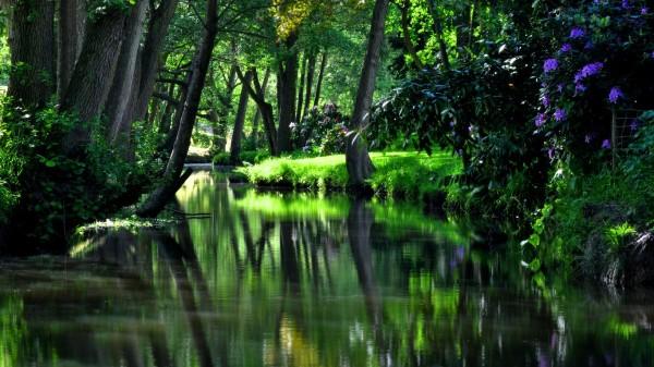 Реки текут до тех пор, пока существуют леса