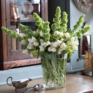 Купить семена, растение – Молюцелла гладкая (Molucca laevis)